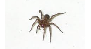 House Spiders In Texas 45degreesdesign